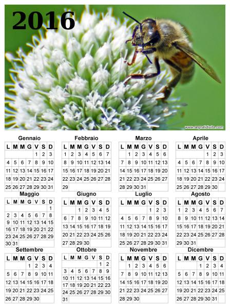 Calendario ape su fiore del 2016