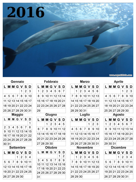 Calendario delfini del 2016