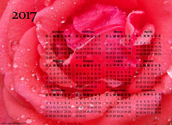 Calendario della rosa del 2017