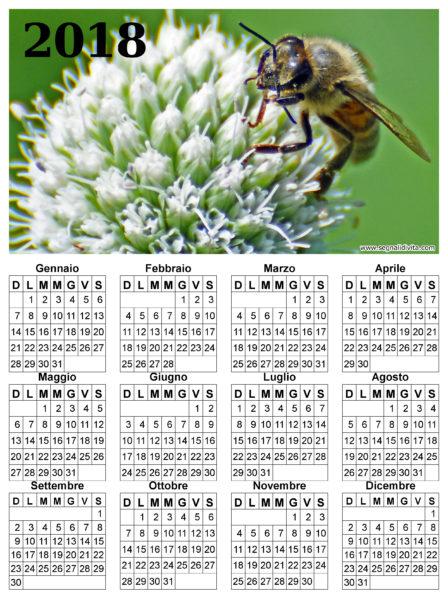 Calendario ape su fiore del 2018