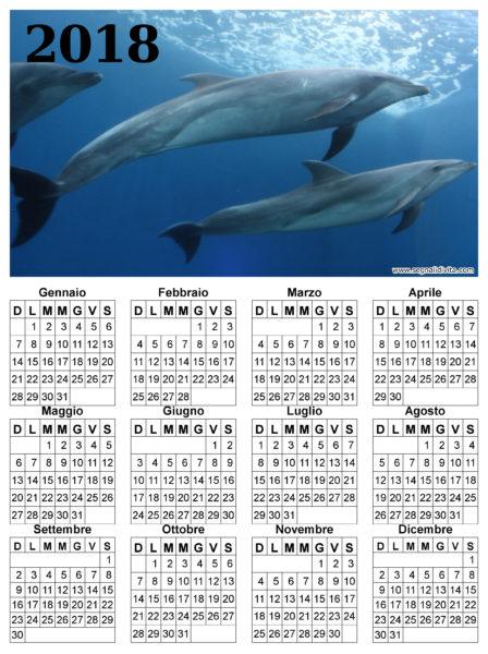 Calendario delfini del 2018