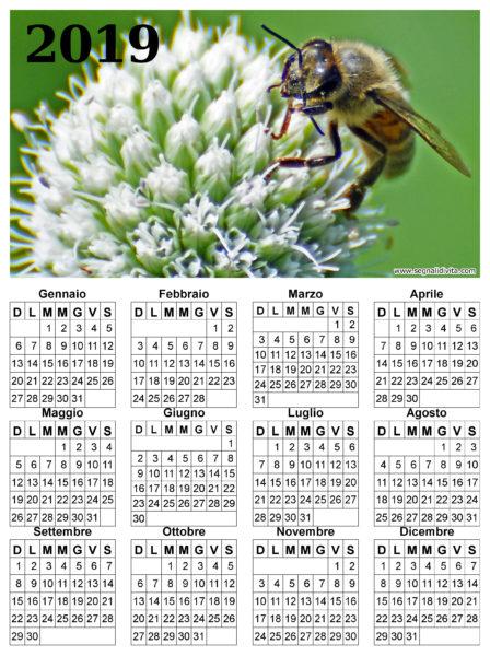 Calendario ape su fiore del 2019