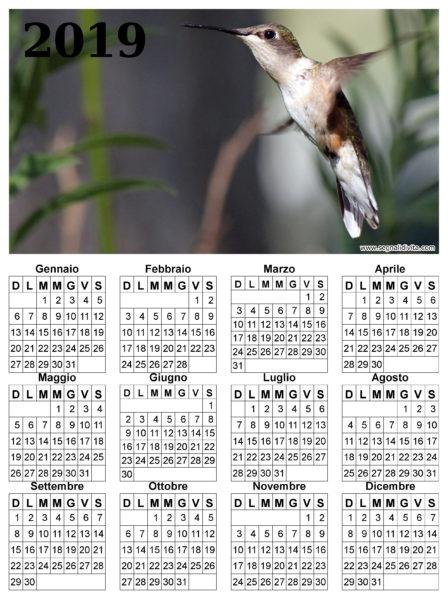 Calendario con colibri del 2019