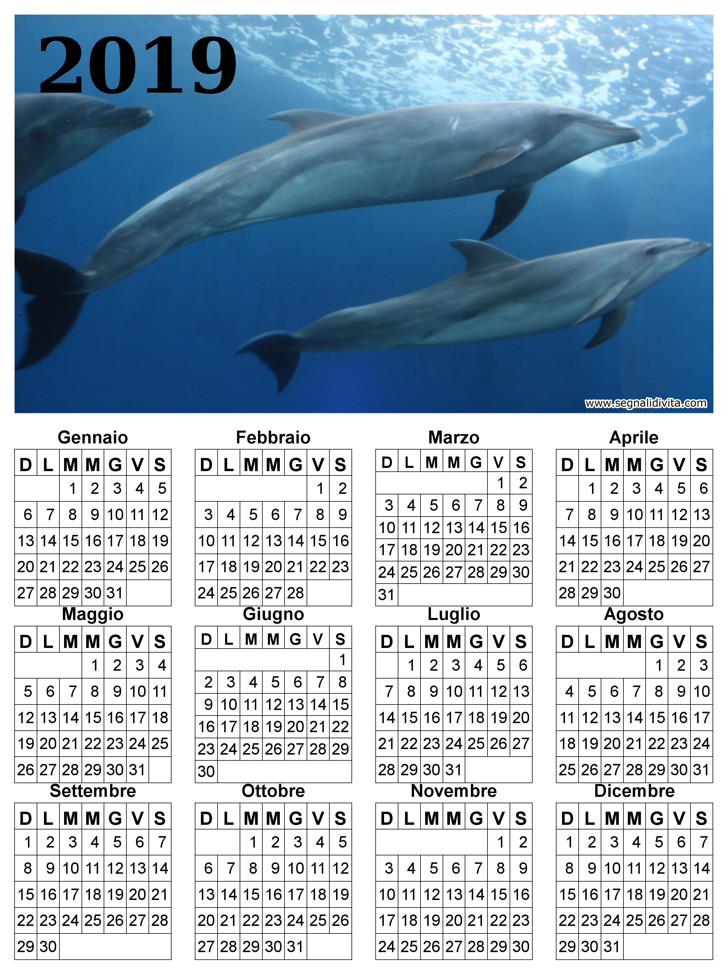 Calendario delfini del 2019