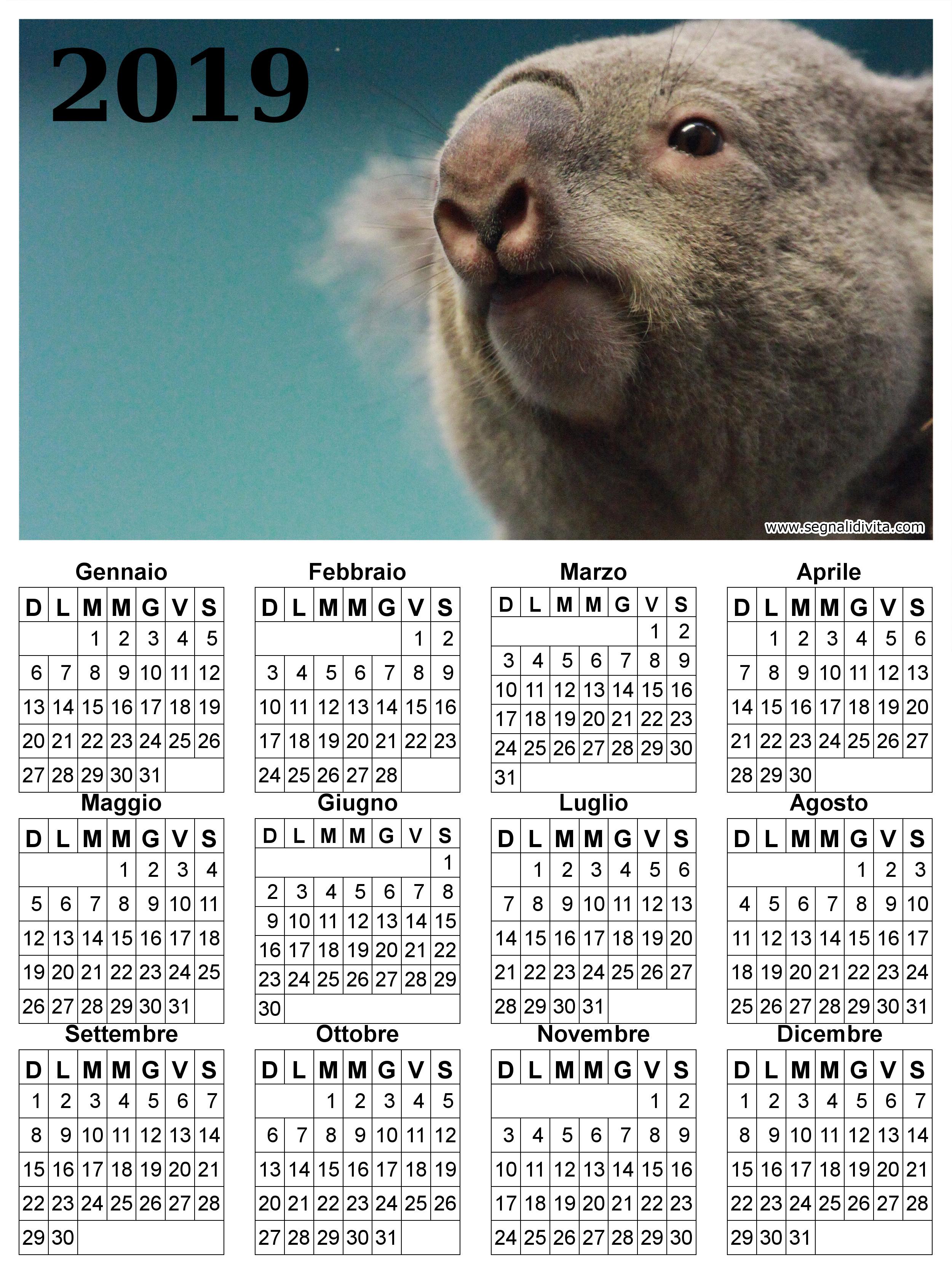 Calendario con Koala del 2019