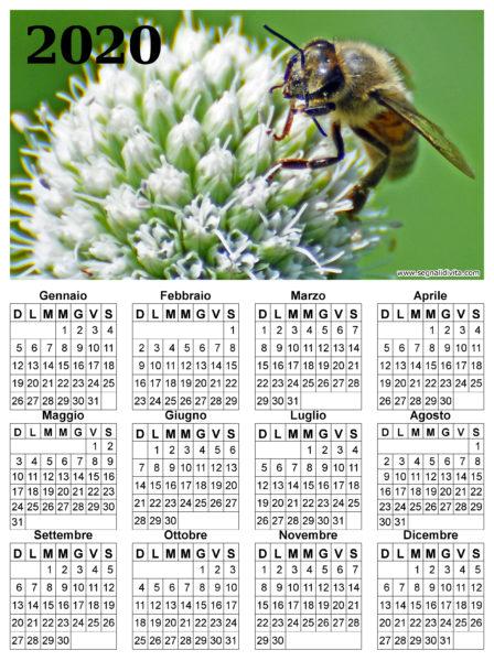 Calendario ape su fiore del 2020