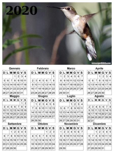 Calendario con colibri del 2020