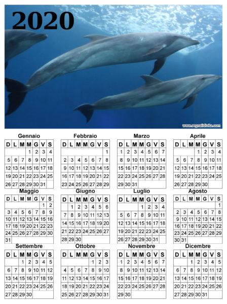 Calendario delfini del 2020