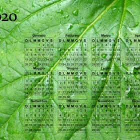 Calendario foglia del 2020