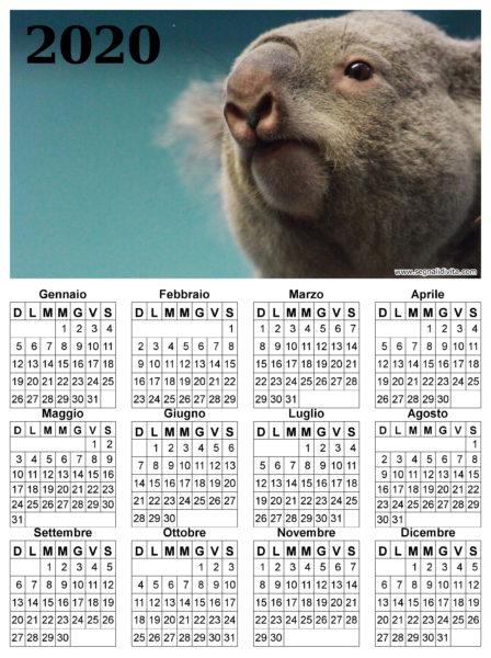 Calendario con Koala del 2020