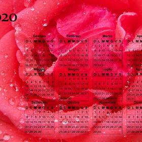 Calendario della rosa del 2020